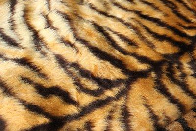 Fabric - Tigerprint